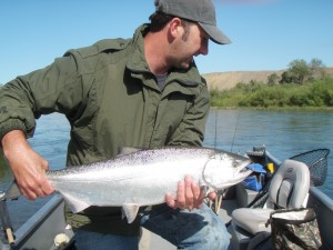 Spring-Run Chinook Salmon Runs Off for Columbia, Snake Rivers