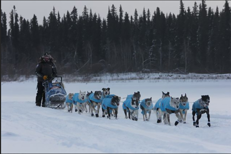 Dopin' Musher: Iditarod Dogs Test Positive for Banned Substance