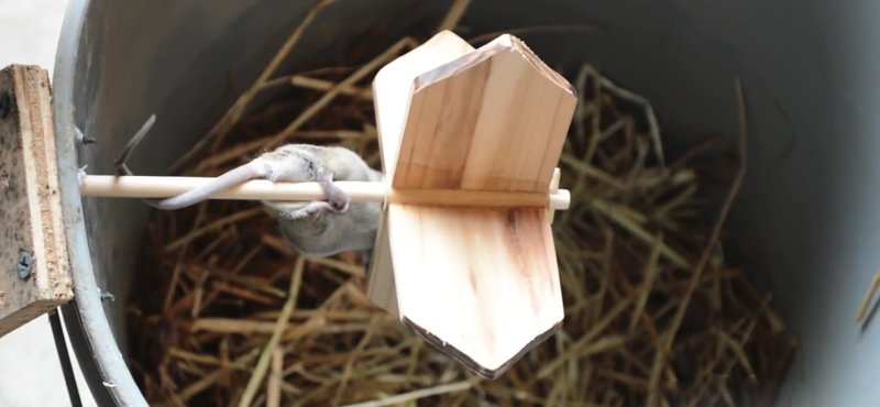 Watch: 427-Year-Old Mouse Trap Design in Action