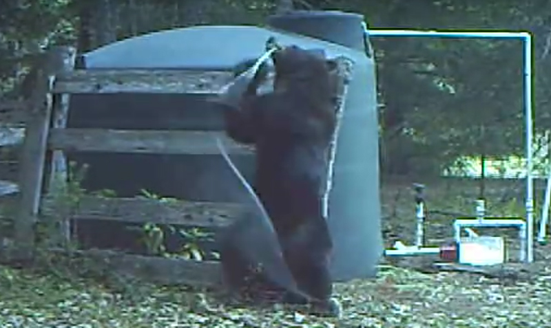 Instant Karma: Bear's Balls Pay the Price For Damaging Water Hose