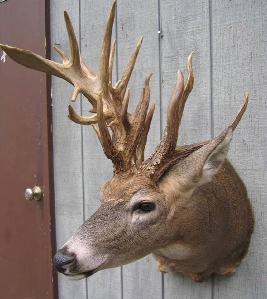 24 Photos of Buck Deer With Super-Weird Racks
