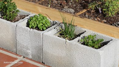 Photo courtesy of https://www.naturalnews.com/054743_cinder_blocks_heavy_metals_home_gardening.html