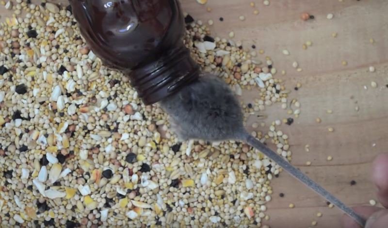 Watch: Make a Mouse Trap From an Old Bottle