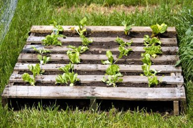 Photo courtesy of: https://www.designrulz.com/design/2013/04/25-ways-of-how-to-use-pallets-in-your-garden/