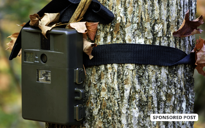 The Best Hunting and Trail Cameras on Amazon