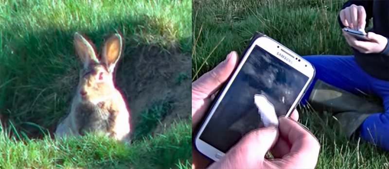 Survival Trick: How to Call Rabbits Out of Their Holes
