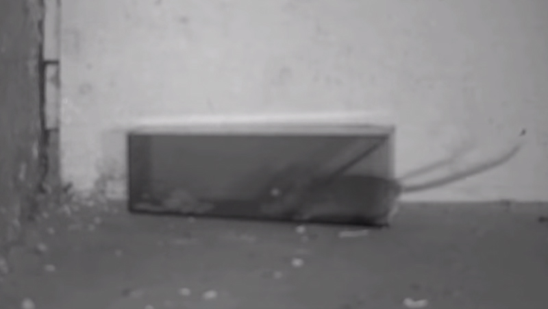 The 'Mice Cube' Mouse Trap in Action