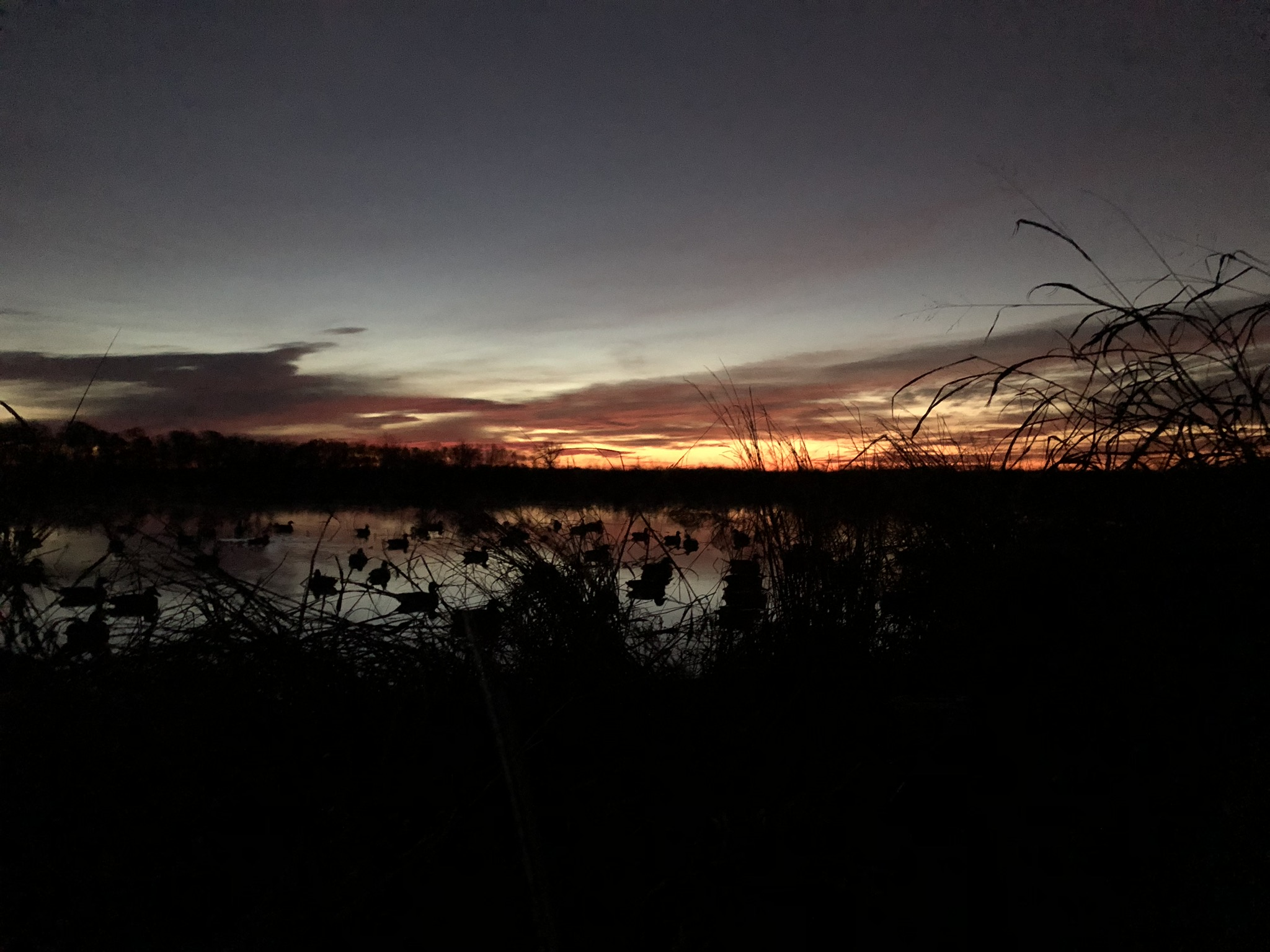Southern Arkansas Waterfowl Hunting