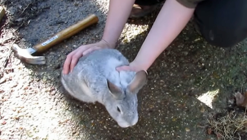 Watch: How to Harvest and Process a Rabbit