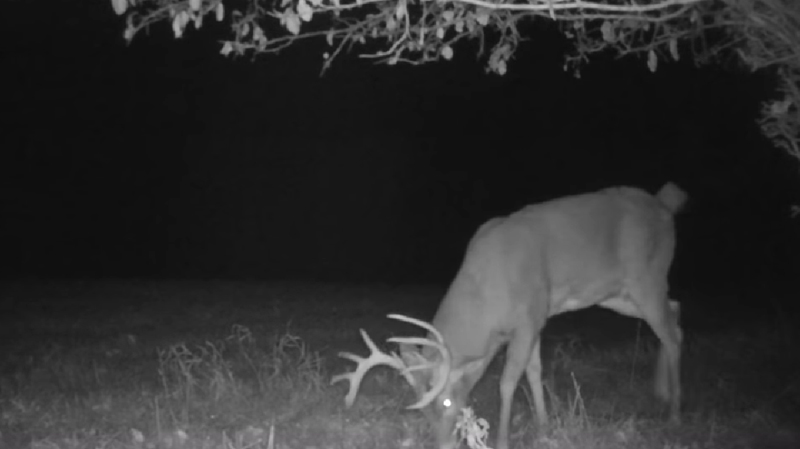 Why Hunters Shouldn't Plant & Hunt Food Plots