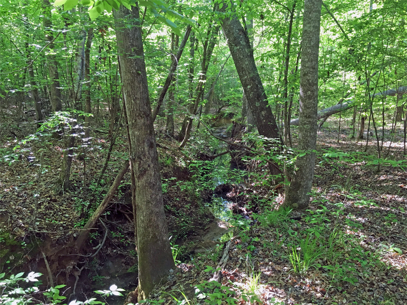 What's prettier than a hardwood creek bottom in the spring?