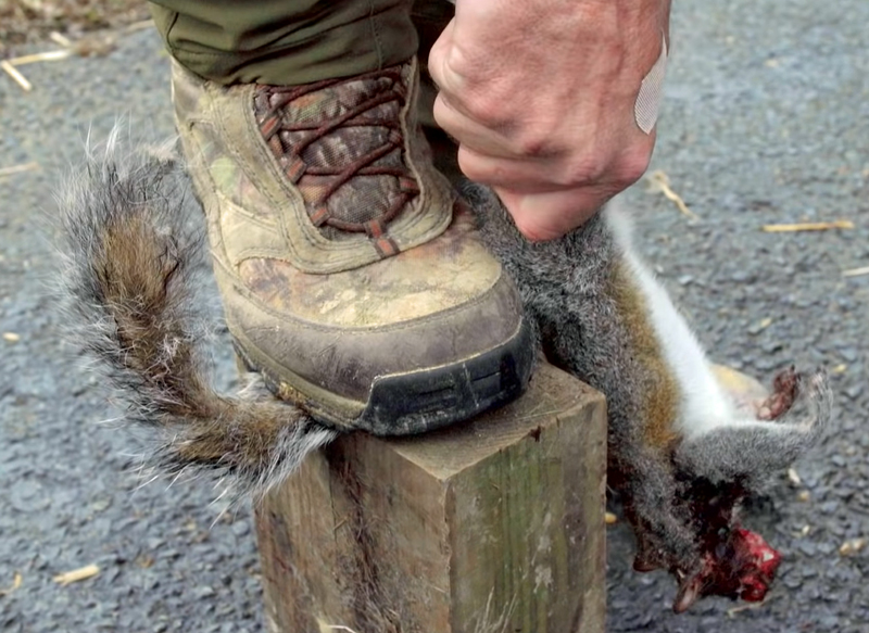 Best Way to Skin a Squirrel? The Tail Method
