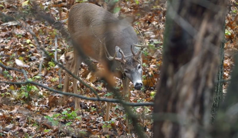 Bowhunting Ban Proposed by Georgia City/County