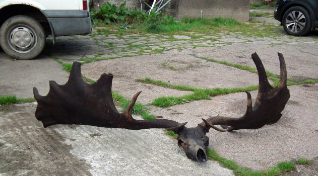 Irish Man Went Fishing, Came Home With 6-Foot Set of Antlers