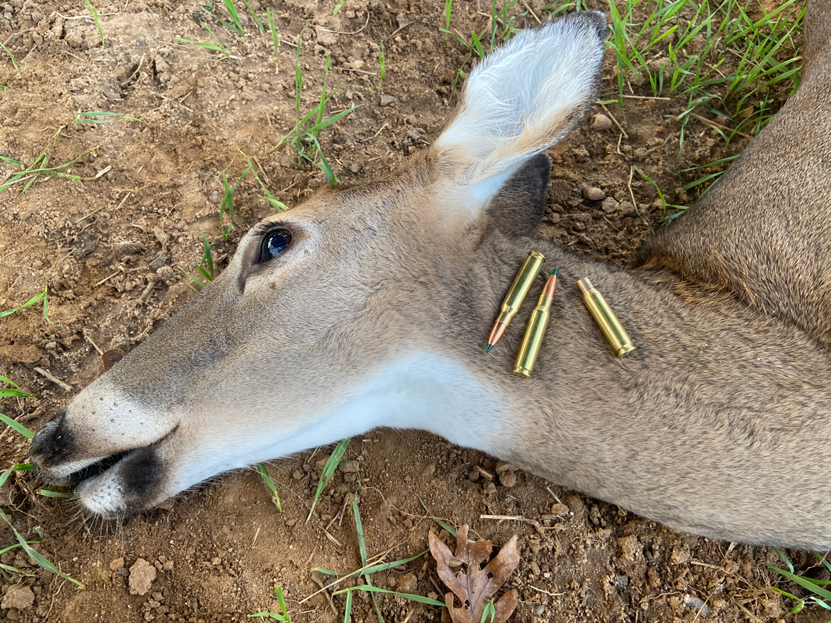 This 120-pound doe fell dead at the shot with Sierra GameChanger ammo. (Photo © Russ Chastain)