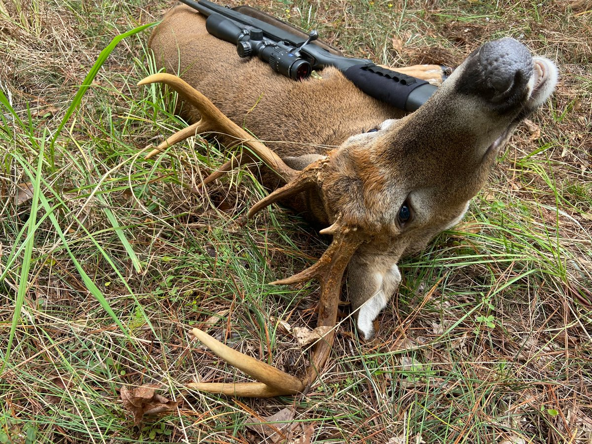 As he fell at the shot, the first buck buried his right antler in the ground and died like that. (Photo © Russ Chastain)