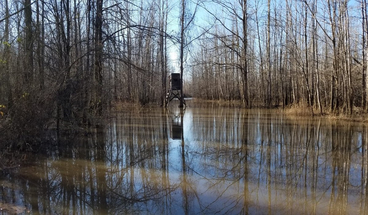 Does Rain Impact Deer Hunting? Weather can be a HUGE Factor.