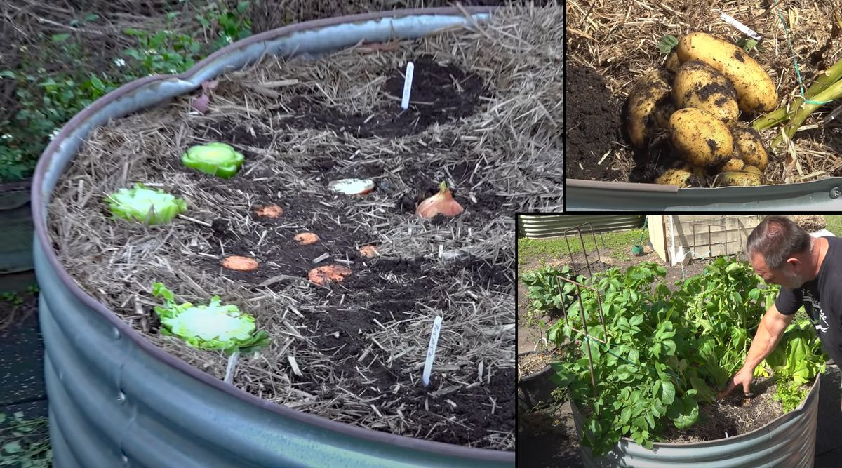Can You Plant Kitchen Scraps to Grow More Veggies?