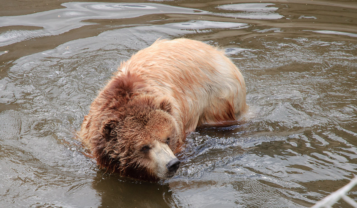 Extending Grizzly Protections