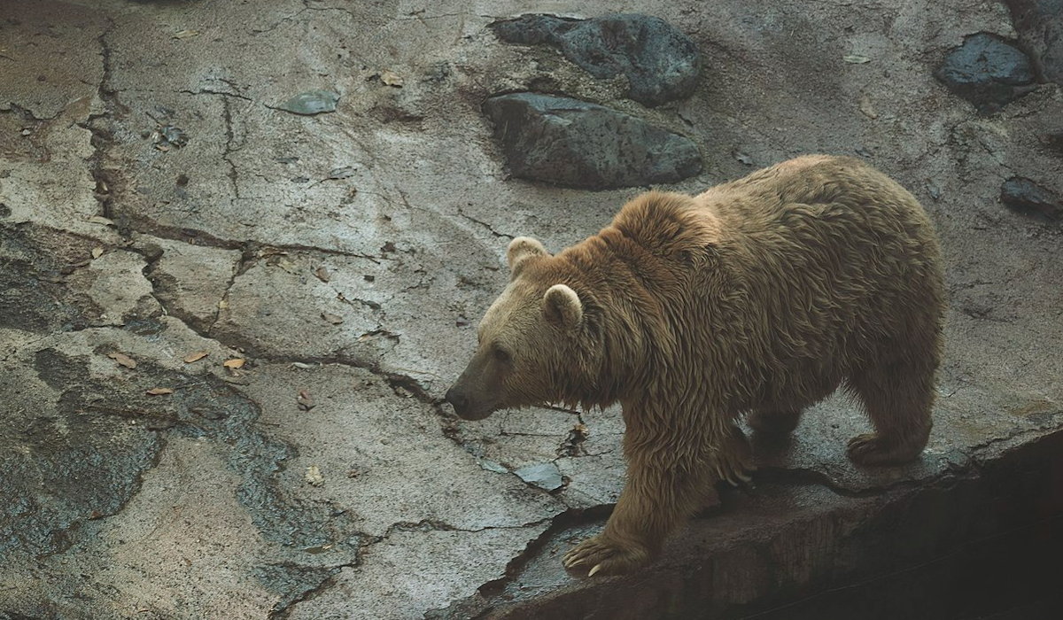 USFWS Now Supports Extending Grizzly Protections